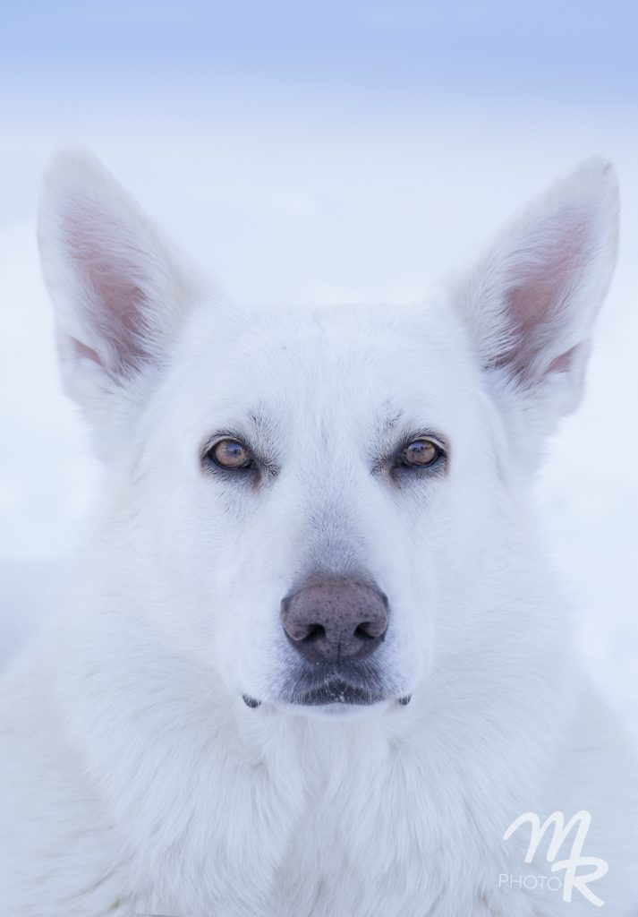 koirakuvausta miljöössä